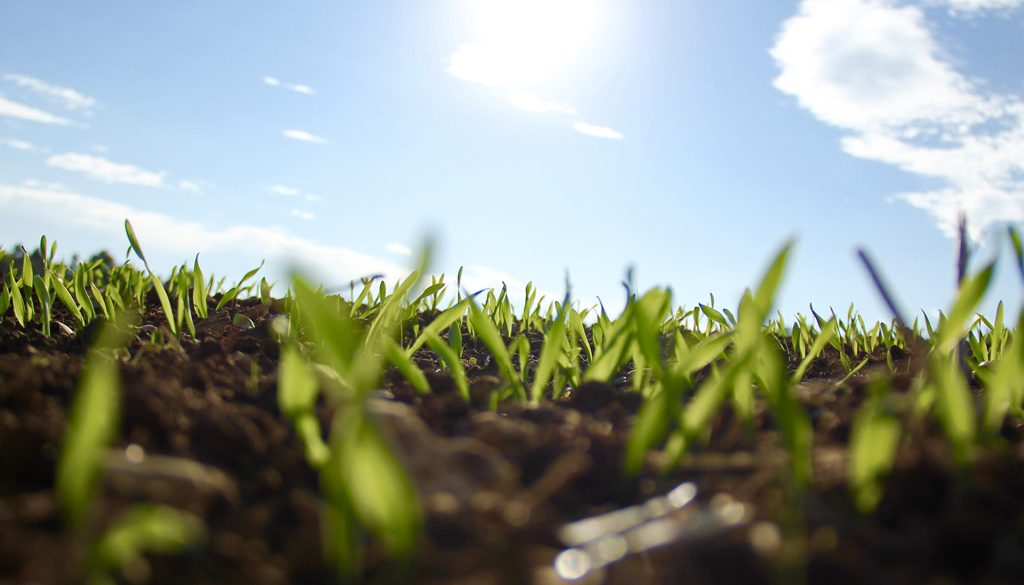 A ground level look at growing grass
