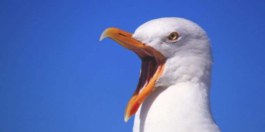 Are you a Seagull Manager?