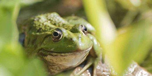 How a Tale of Two Frogs Can Measurably Improve Your Business